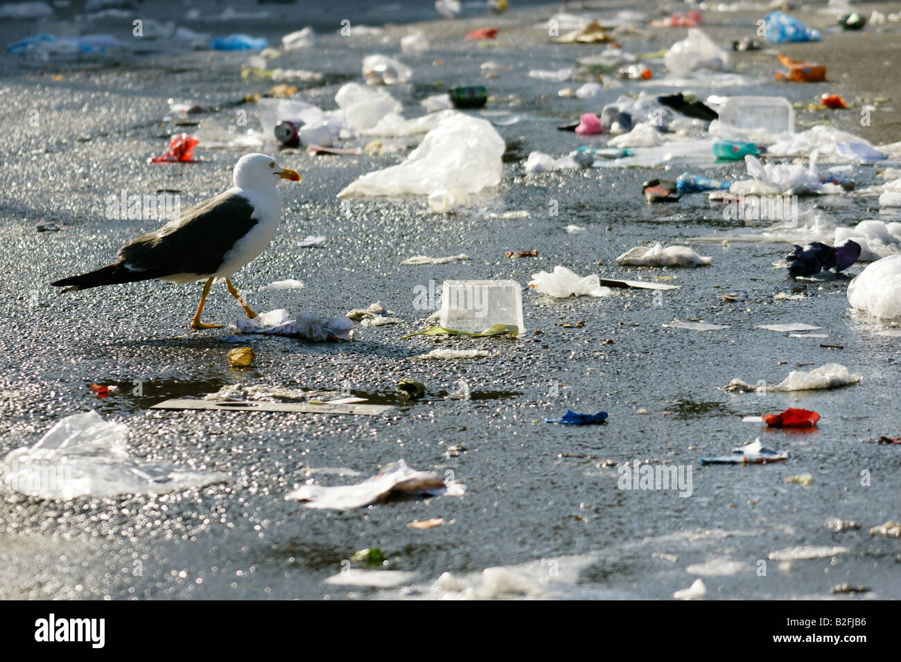 Seagull walking in horrible litter garbage mess at street in Rotterdam, Netherlands - Stock Image