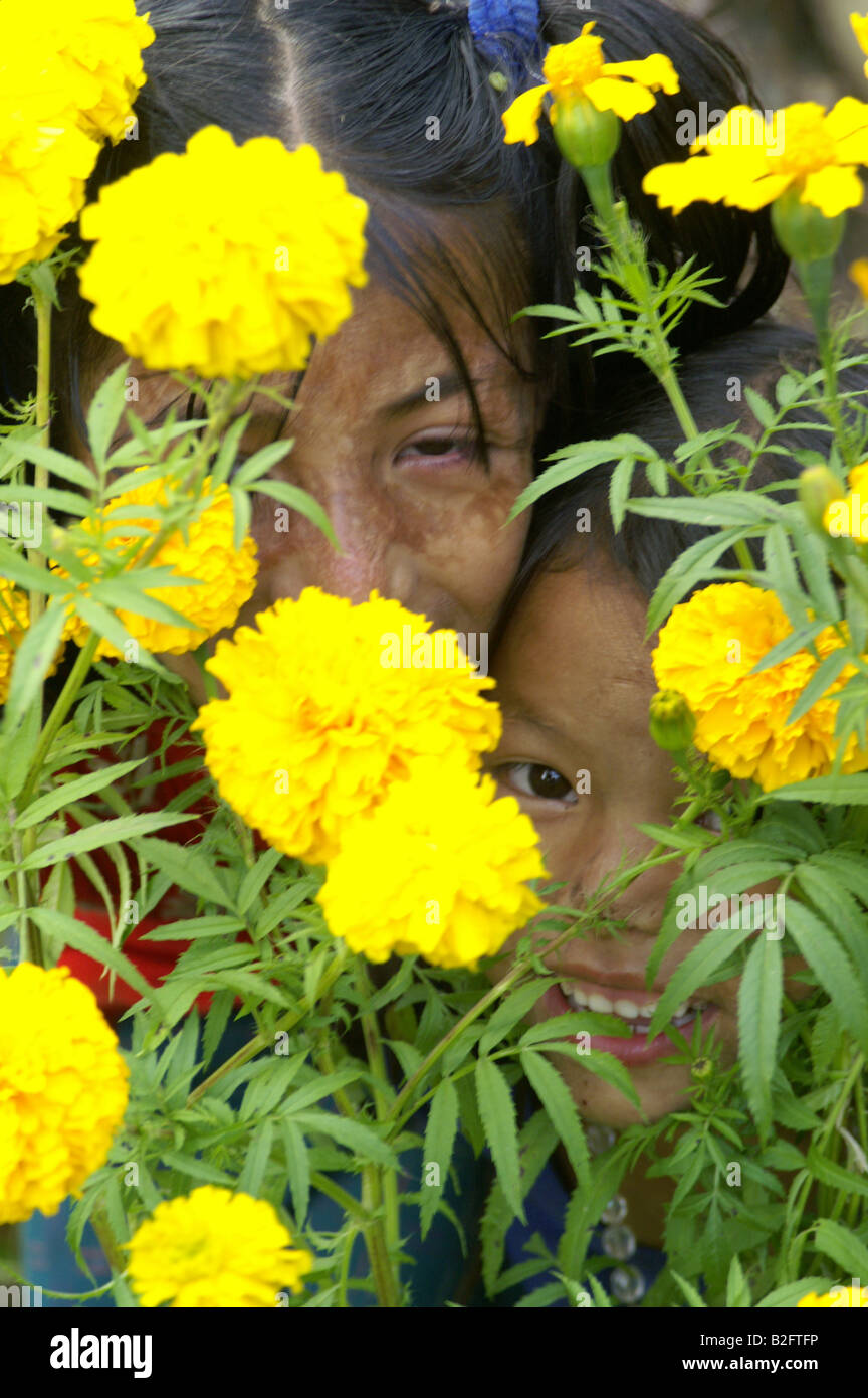two indian girls young sisters hidden behind yellow flower garden
