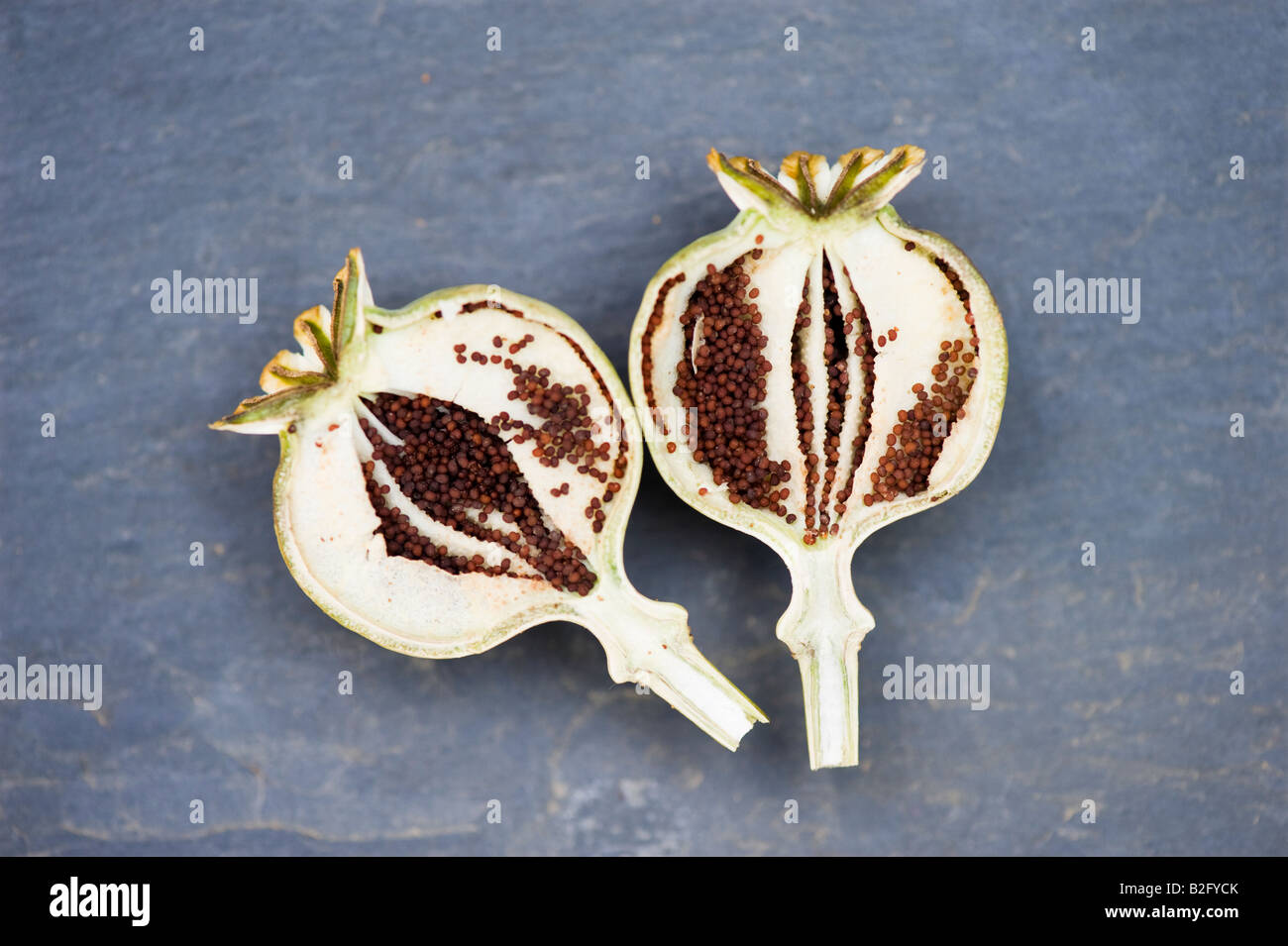 Poppy Seeds In A Poppy Seed Pod That Has Been Split Open Stock
