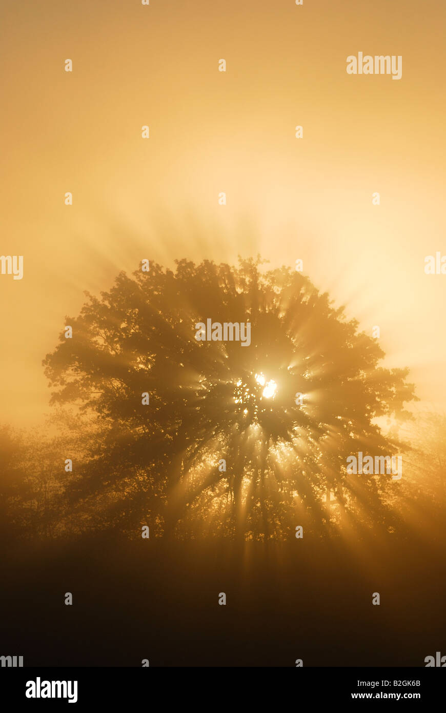 cue state tree shadow silhouette dawn backlight upper bavaria germany - Stock Image