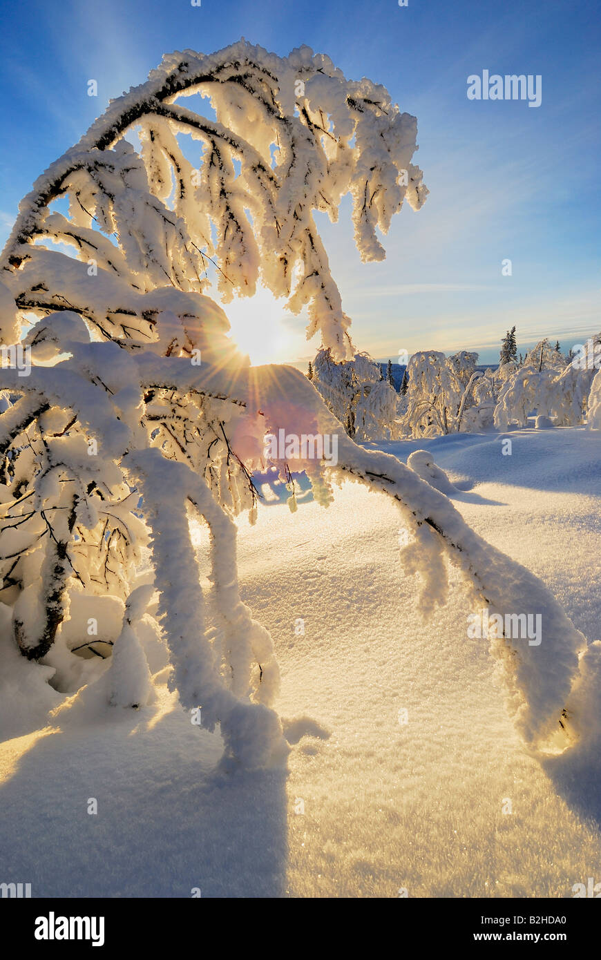 wintry landscape scenery snow covered stubba nature reservatoin Laponia lapland norrbotten sweden scandinavia europe - Stock Image