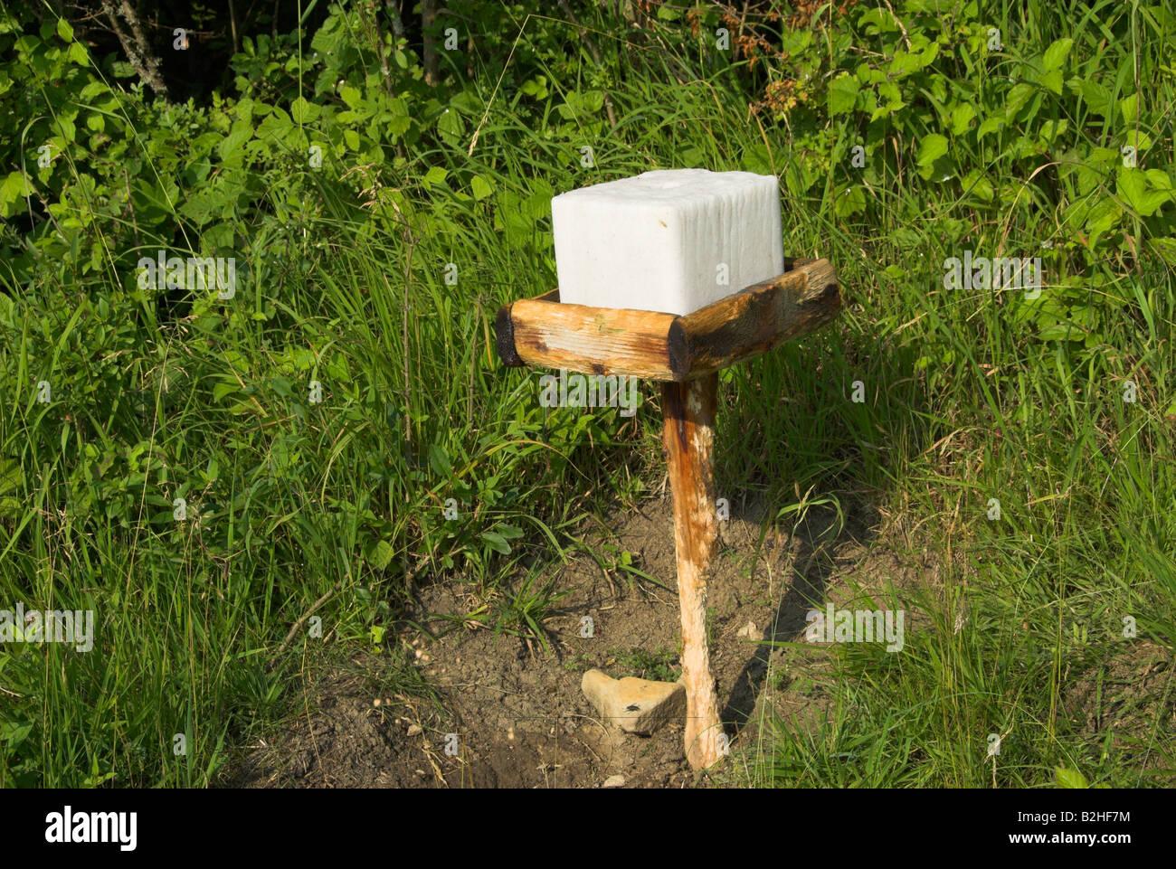 deerlick forst gersheim germany nature reserve Von Jägern aufgestellte Salzlecke für Rotwild Gersheim Deutschland Salzleckstein Stock Photo