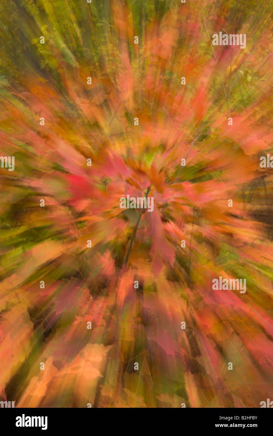 warped woolly ambiguous autumn autumnal autumnally leaves Wischeffekt durch Drehen Bewegen der Kamera farbisges - Stock Image