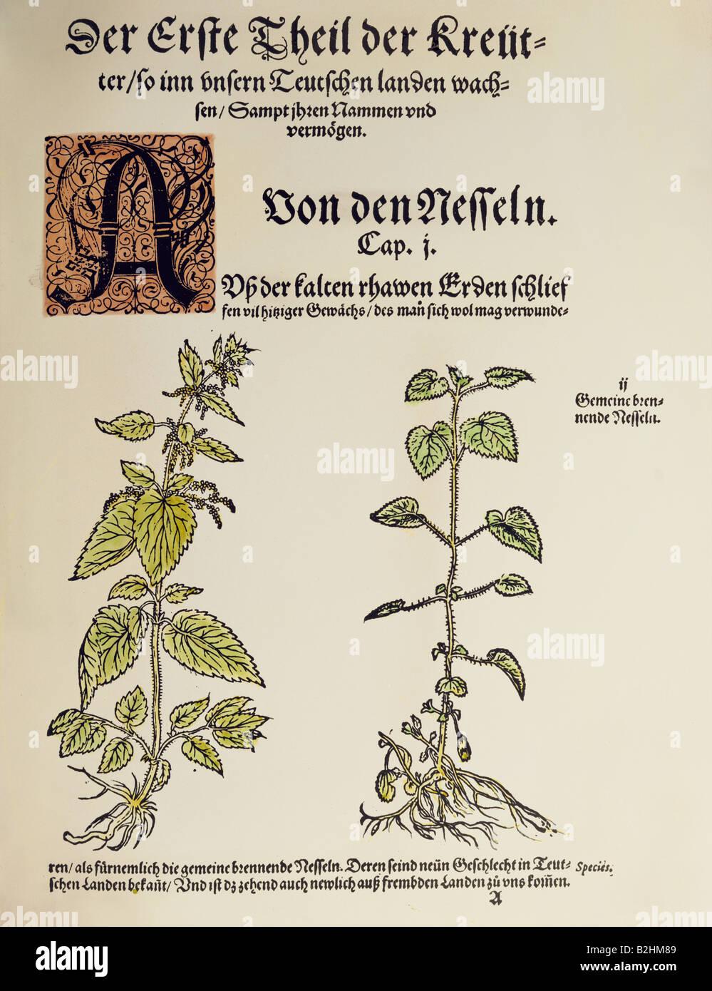 [Image: botany-herbs-stinging-nettle-urtica-dioi...B2HM89.jpg]