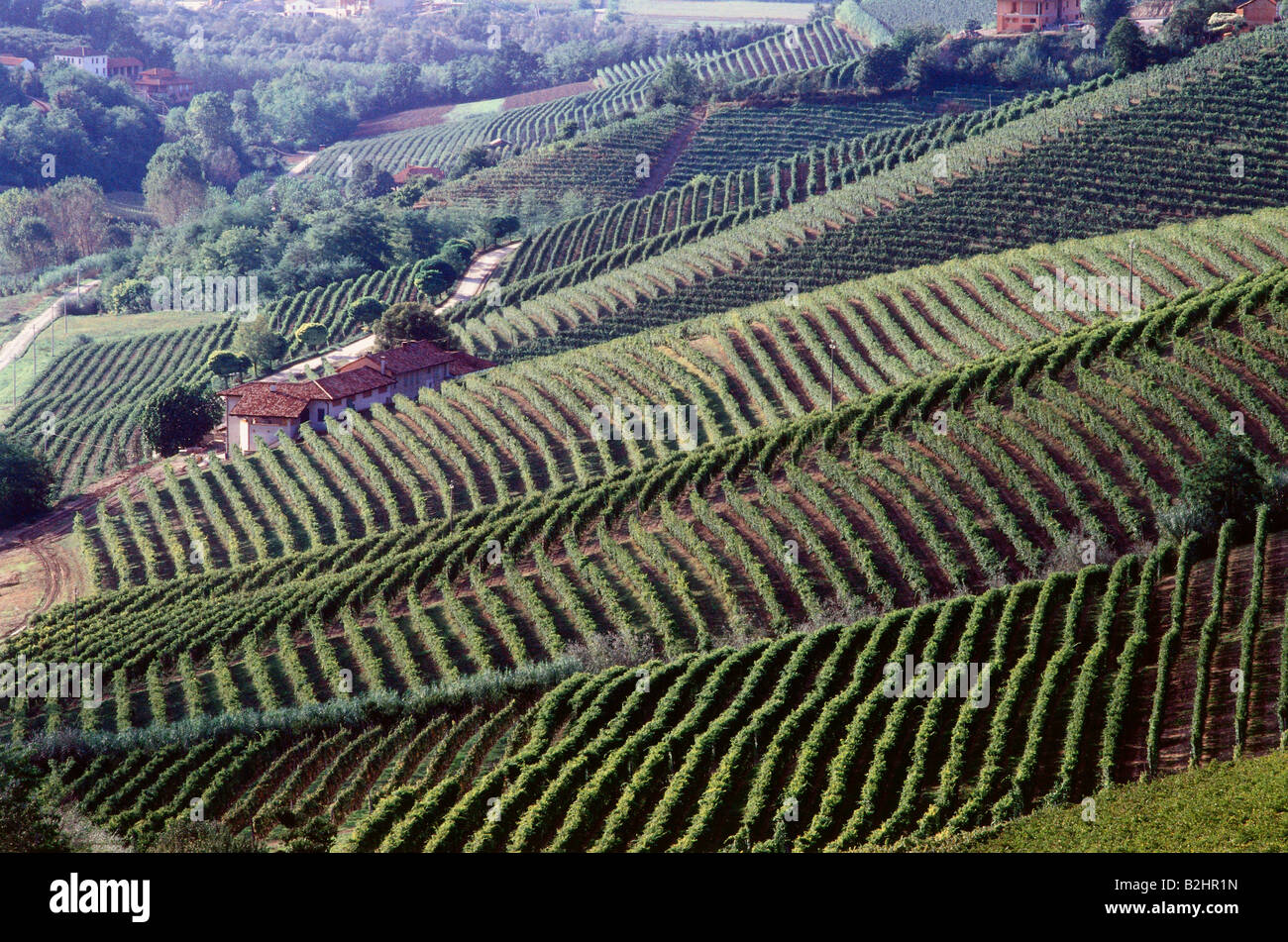 geography / travel, Italy, landscapes, Piemont, Barbaresco, vineyards, vine, vineyards, cultivation, vine-growing, - Stock Image
