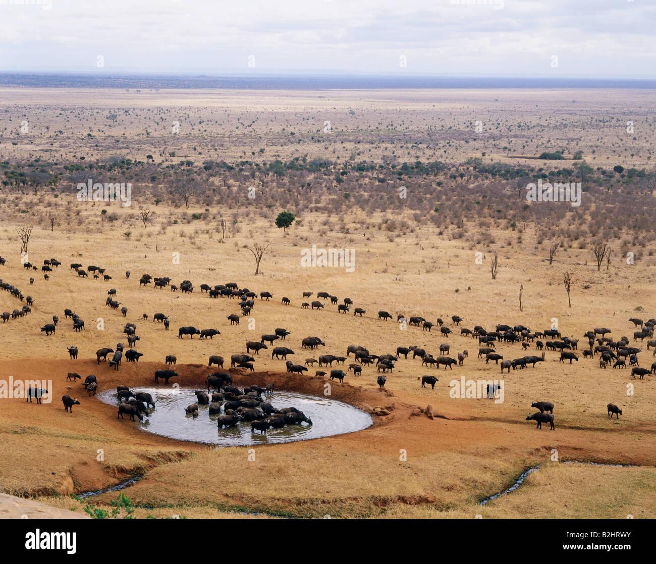 Travel Geography: Geography / Travel, Kenya, Tsavo Park West, Herd Of