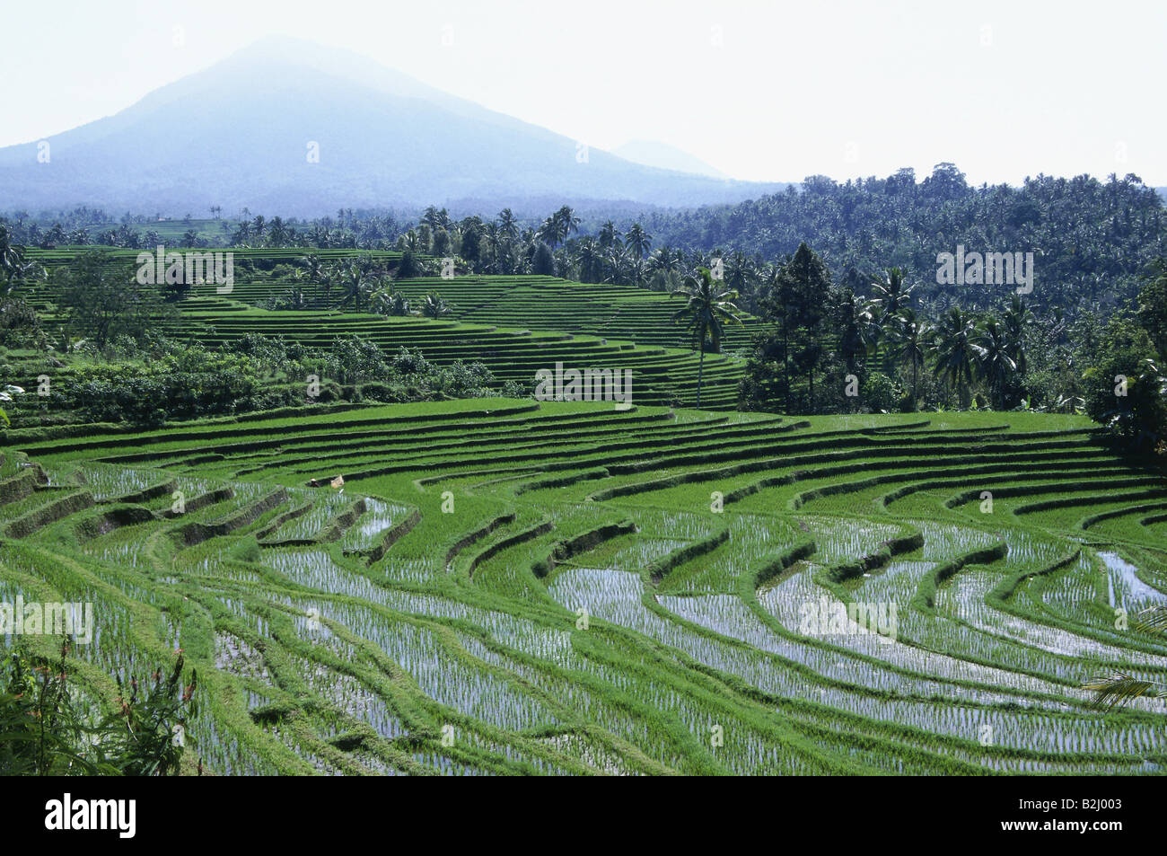 geography / travel, Indonesia, Bali, agriculture / farming, rice terraces at Ampadan, Mount Batukau, rice cultivation, - Stock Image