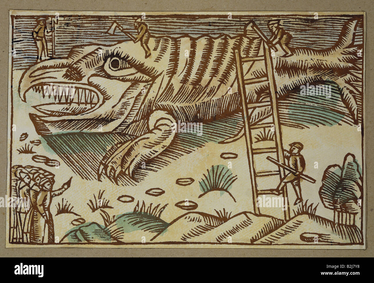 fishing, whaling, peeling of a stranded whale, woodcut, 'Historia de gentibus septentrionalibus' by Olaus - Stock Image
