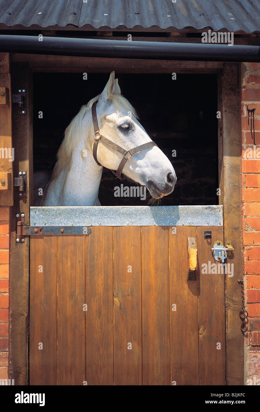 Horse in the stable looking out through open stable door & Horse in the stable looking out through open stable door Stock Photo ...