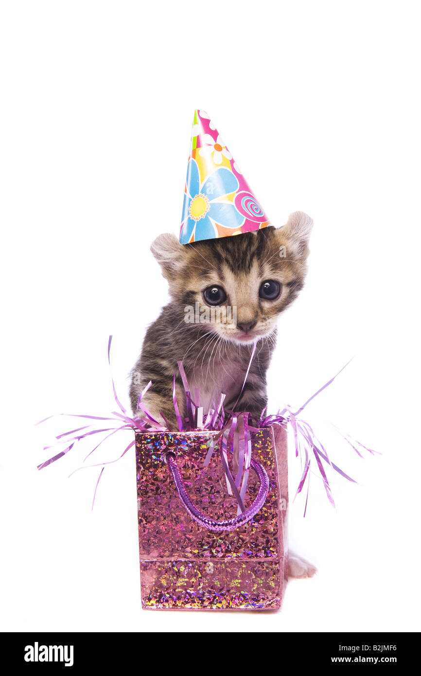 Adorable Happy Birthday Kitten Wearing Hat With Gift Bag Isolated On White Background