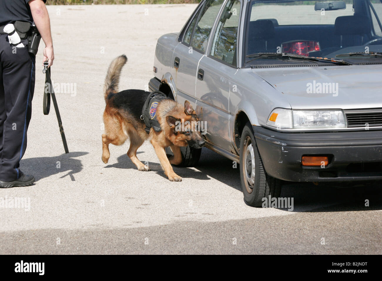 A police dog searching for drugs on an old car Stock Photo