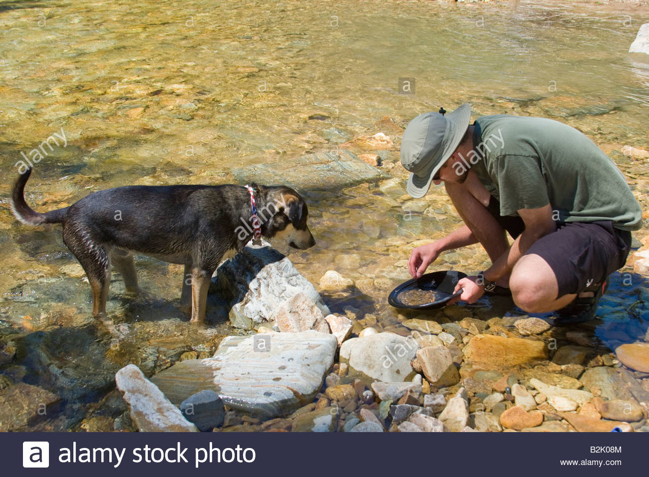 A young adult panning for gold on a mountain stream while his dog watches - Stock Image