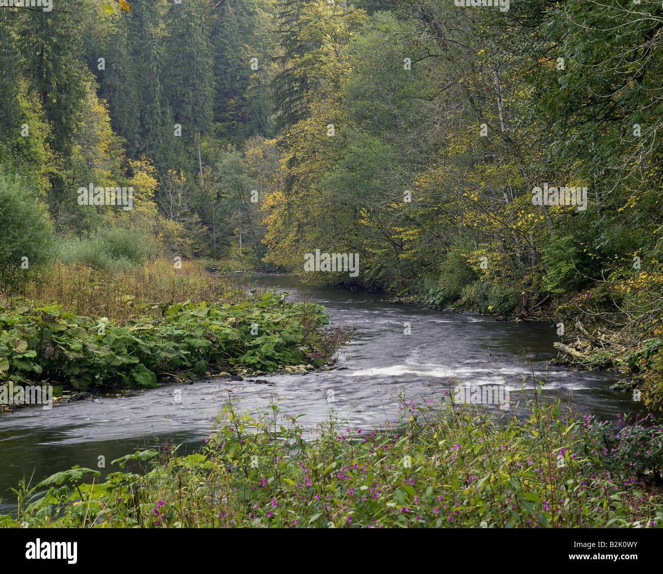 geography / travel, Germany, Baden-Wuerttemberg, landscapes, Black Forest, Nature Park Südschwarzwald (South - Stock Image