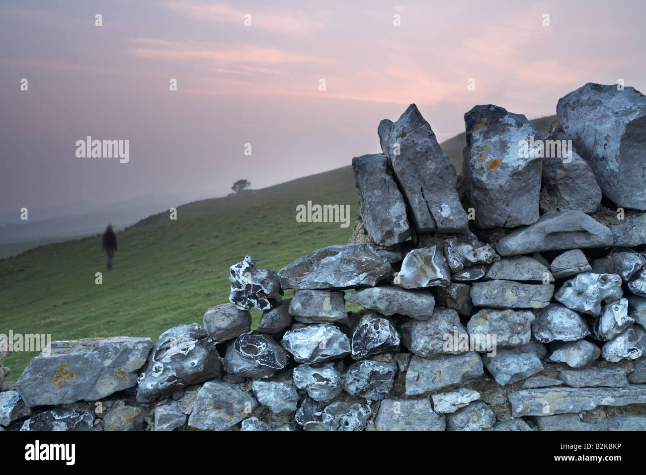 Person walking across a field beyond a dry stone wall at sunset, near Abbotsbury village, Dorset county, England, - Stock Image