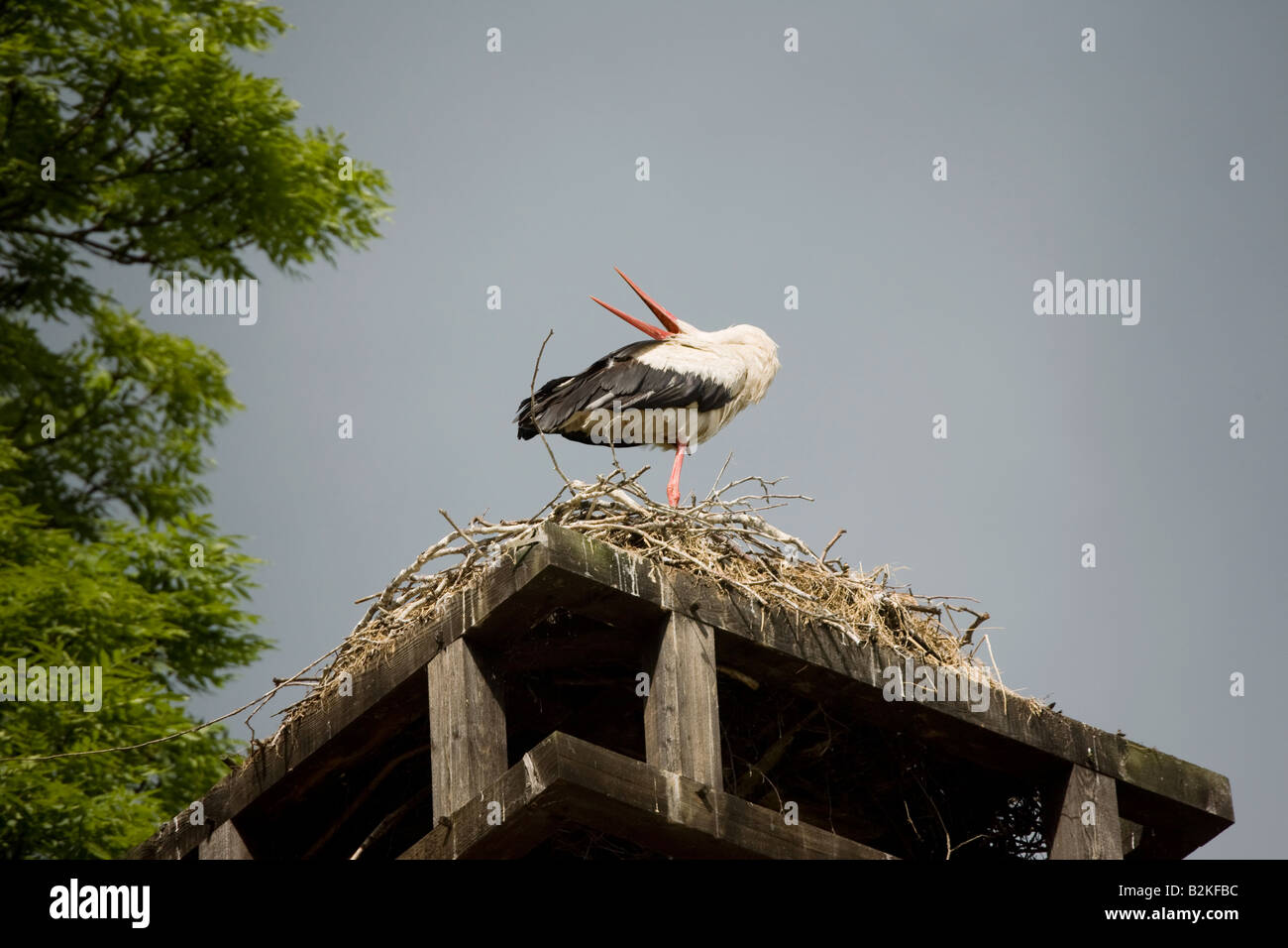A stork on his nest Stock Photo