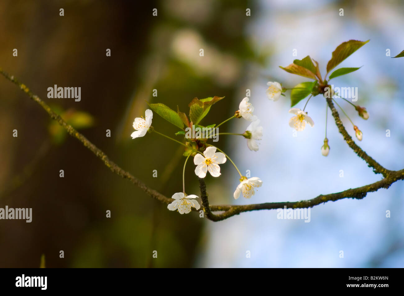 Early Spring Flowers In Cedar River Park Stock Photo 18876557 Alamy