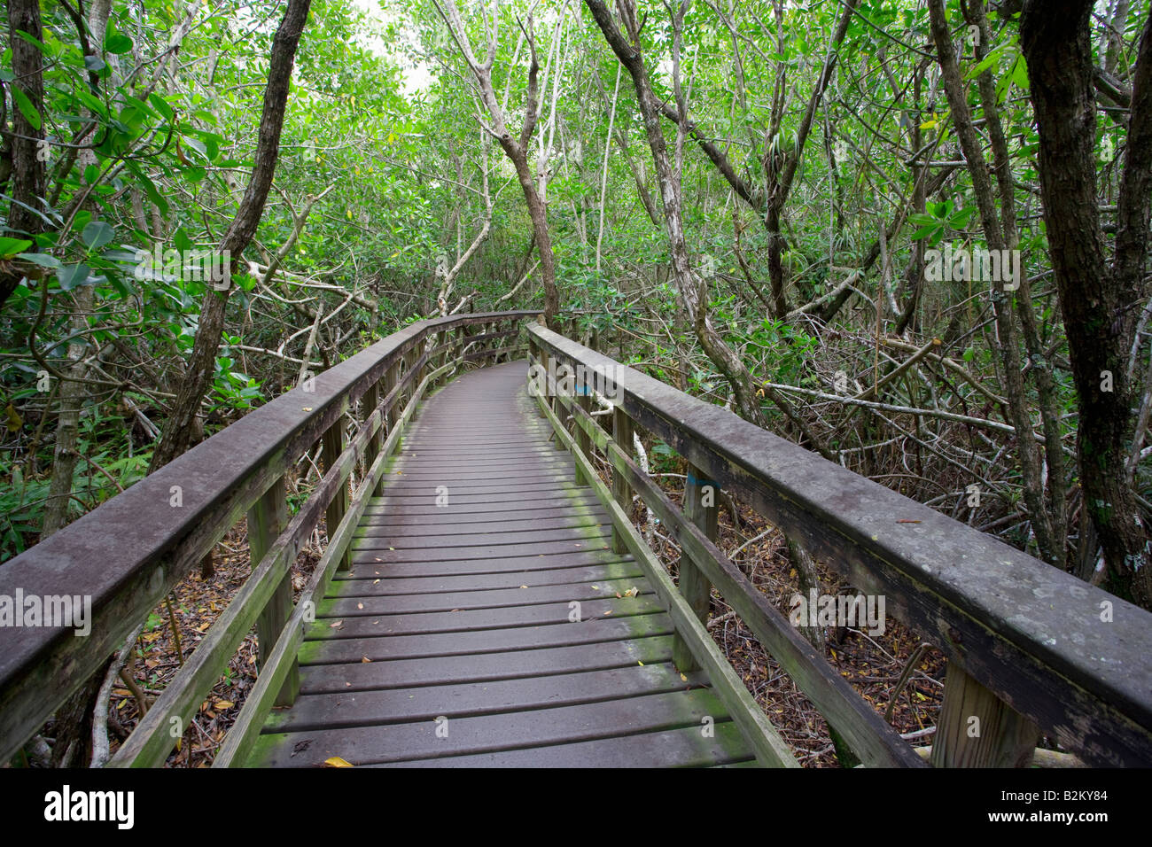 pathway through Everglades National Forest, Florida, USA - Stock Image