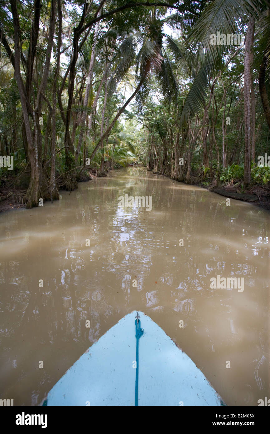 Looking across the bow of a tour boat while moving silently up the Indian River in Dominica s northern rain forests - Stock Image