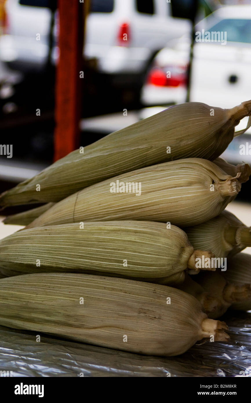 Mexico, Monterrey, steamed Ears of corn in their own sheath - Stock Image