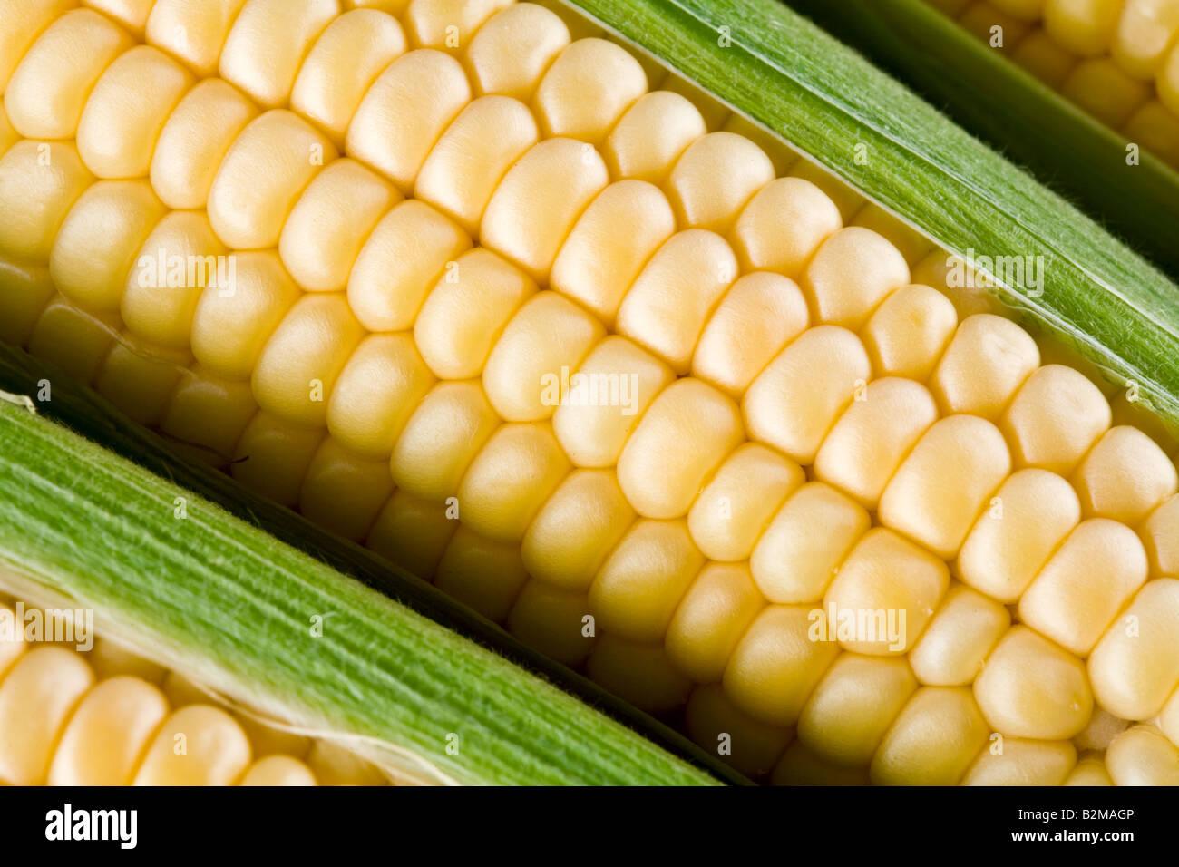 maize - Stock Image