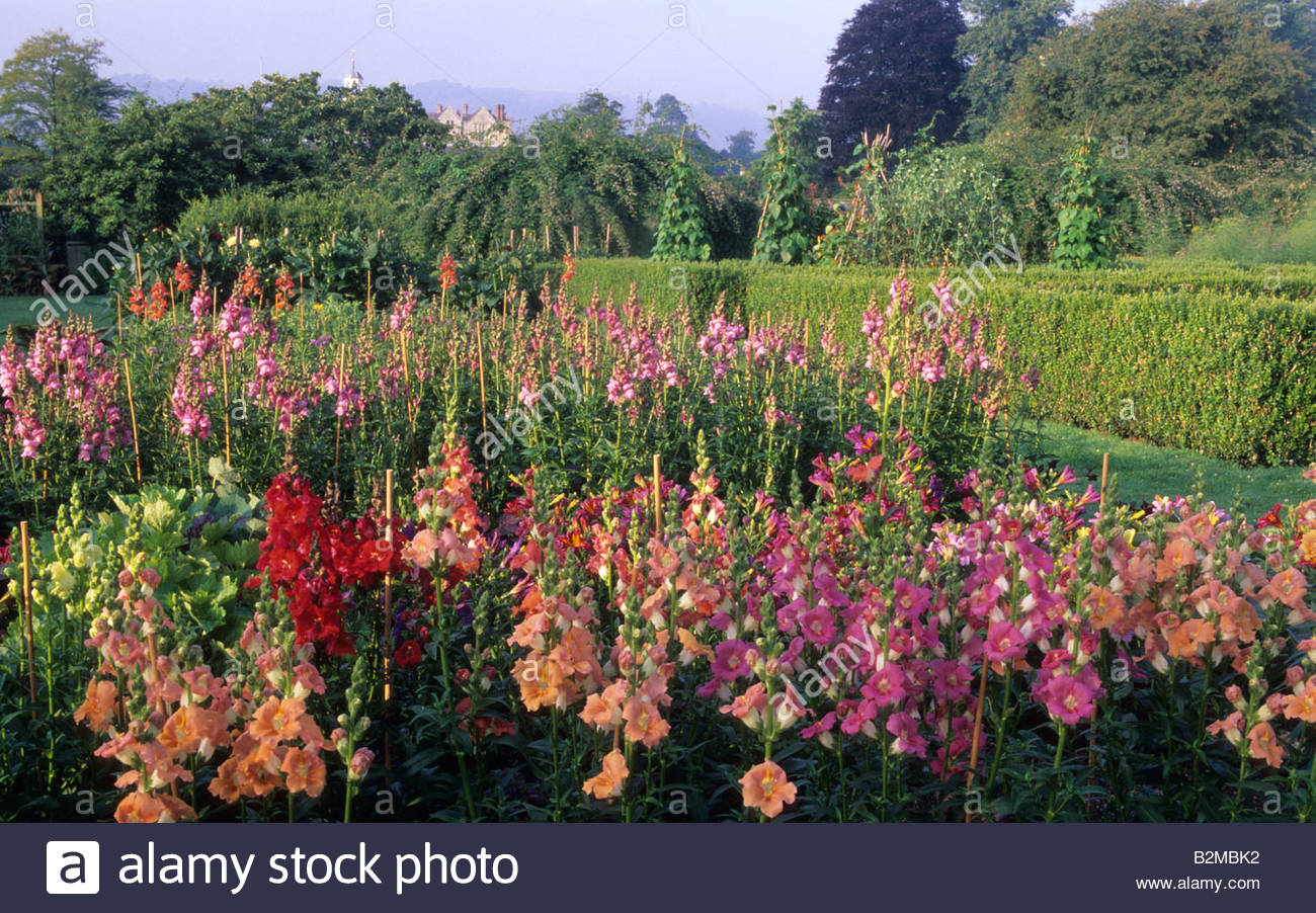 Parham Sussex Cutting Flower Garden Grass Path With View Though To Main  House Mixed Snapdragon Antirrhinum Trumpet Serenade
