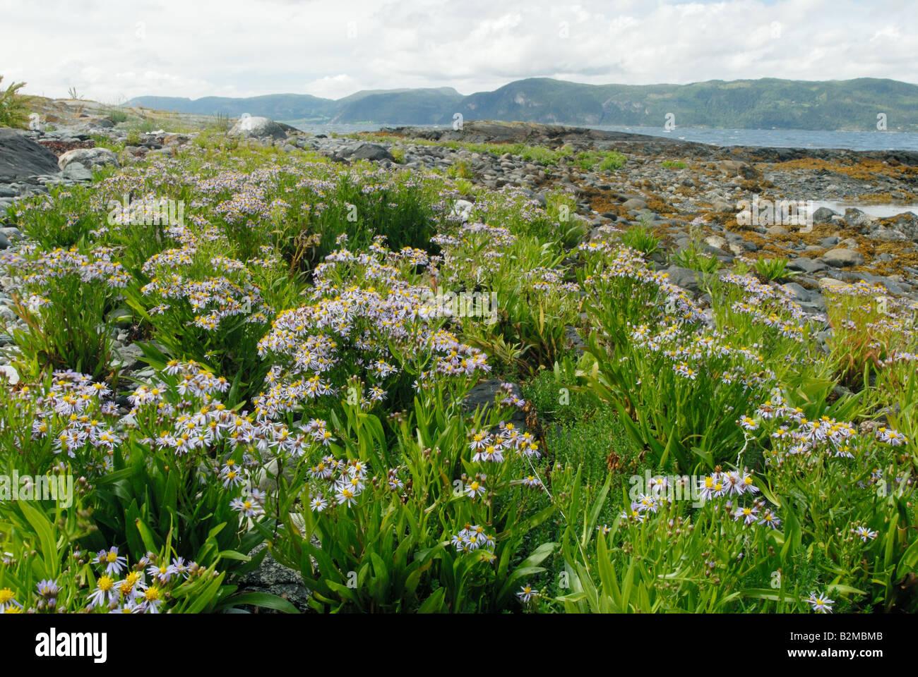 The beach in Nord-Trøndelag in Norway Stock Photo