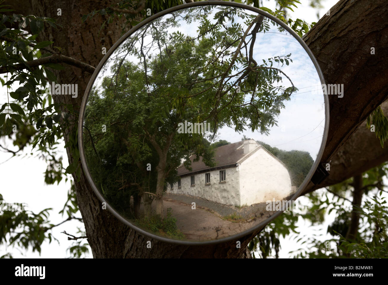 convex security mirror attached to a tree as a drivers aid county down northern ireland - Stock Image