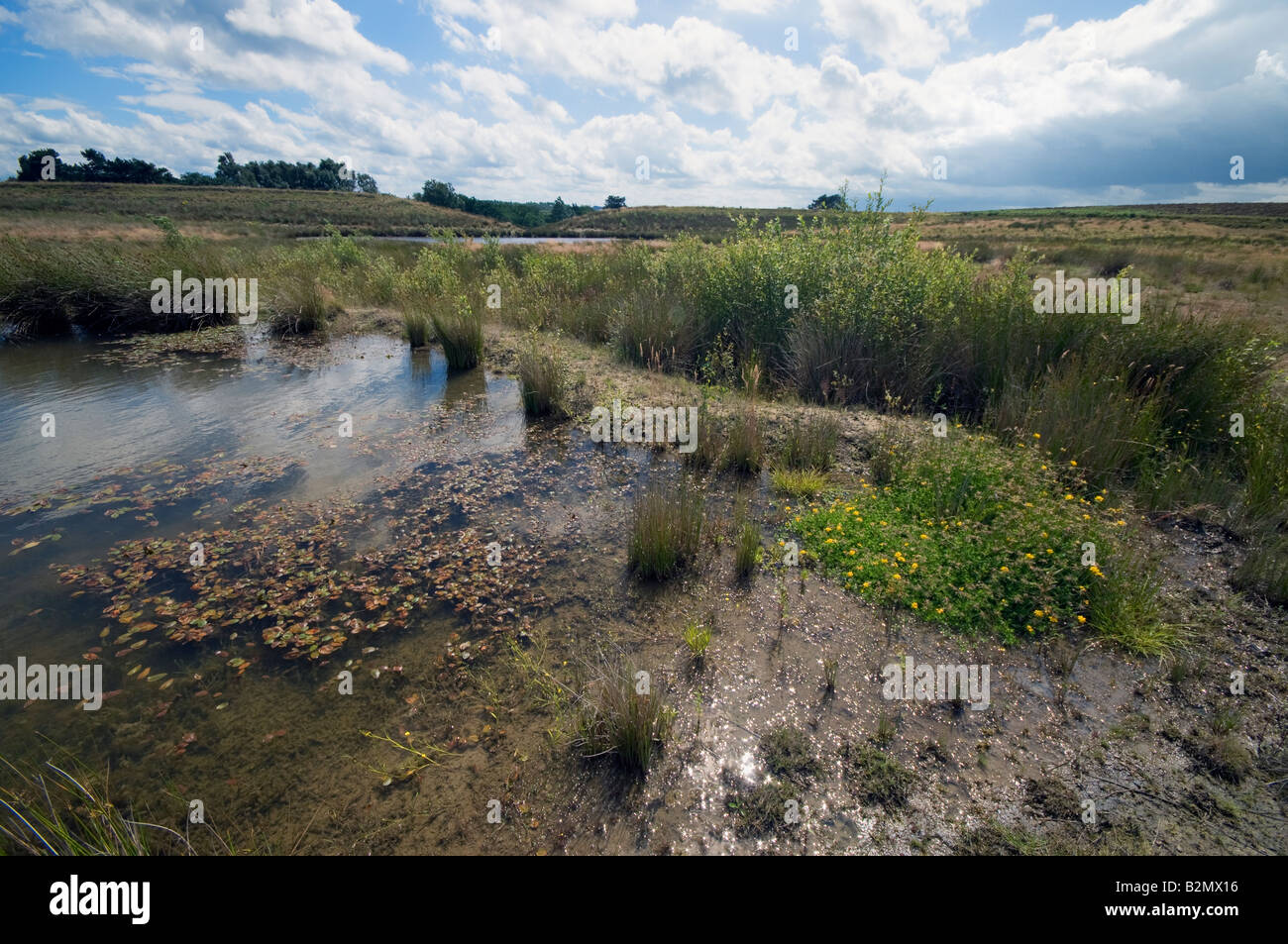 Returning vegetation and new life  on a drained reservoir - Stock Image