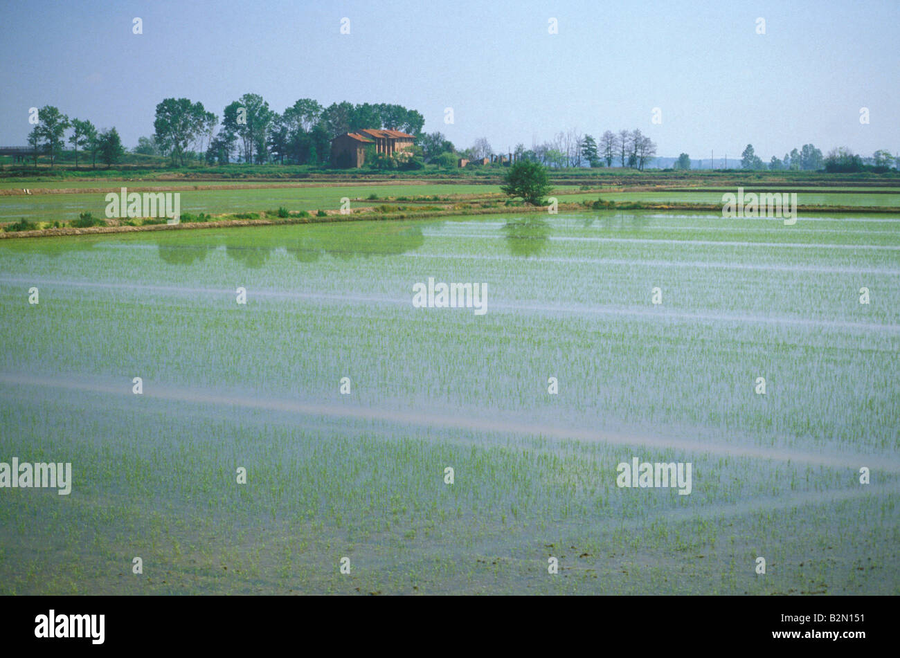 paddy fields, lame del sesia park, Italy - Stock Image
