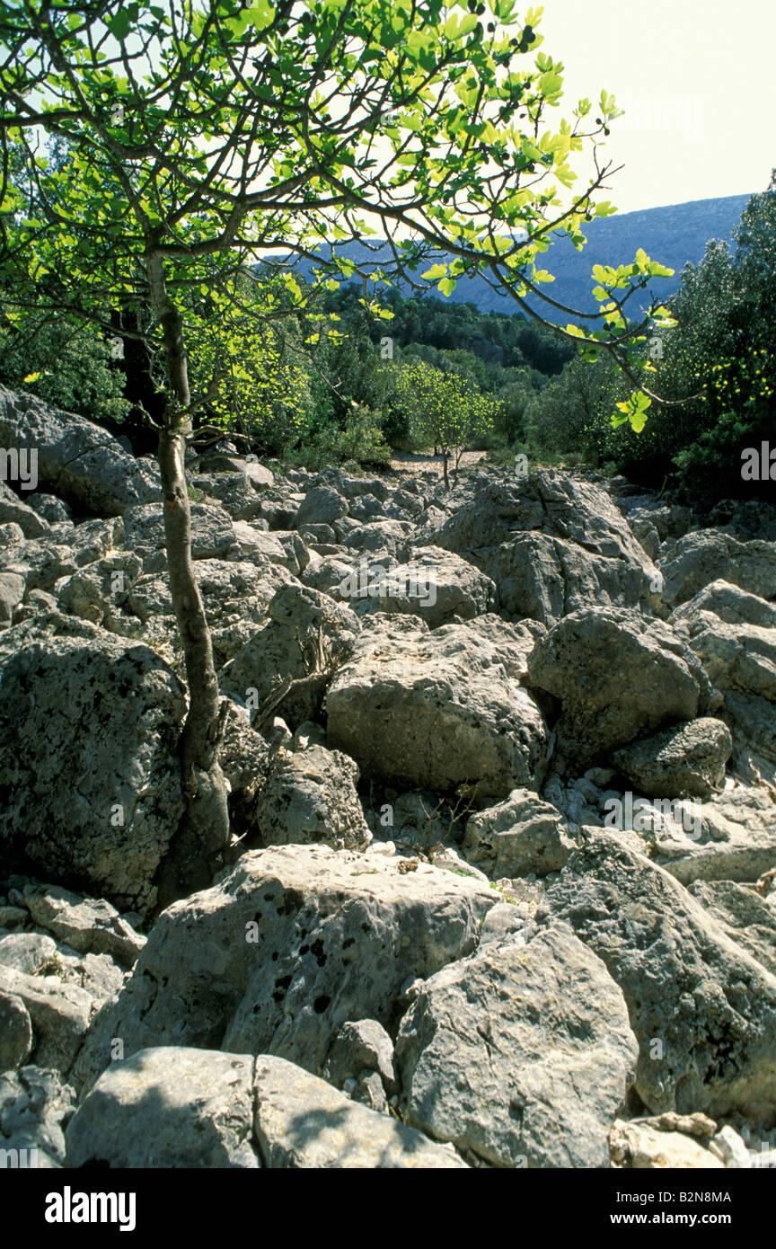 sa oche stream, supramonte, italy - Stock Image