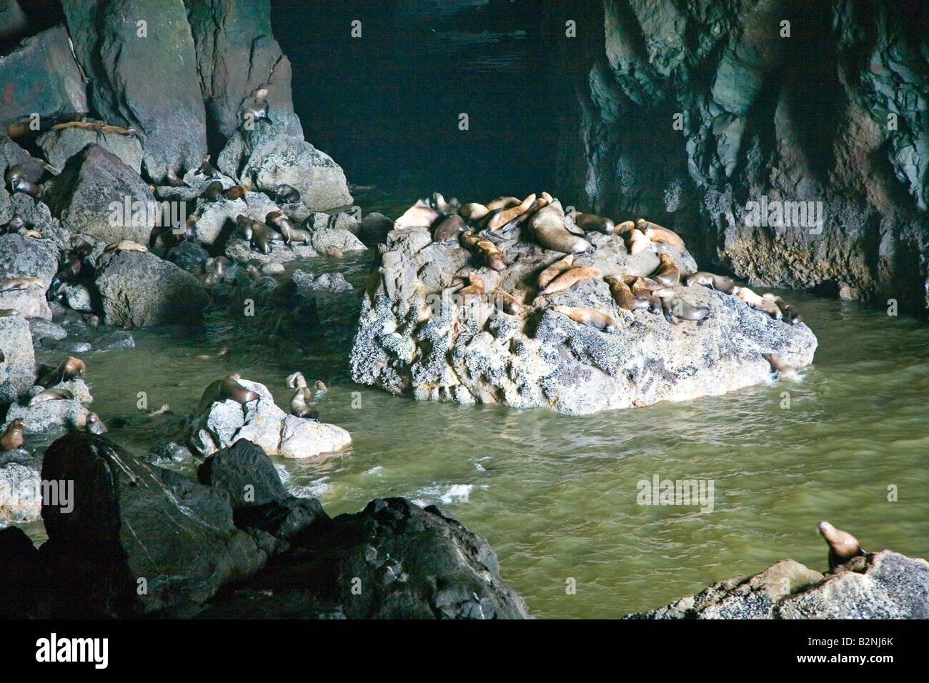 Sea Lion Caves Oregon Stock Photos & Sea Lion Caves Oregon ...