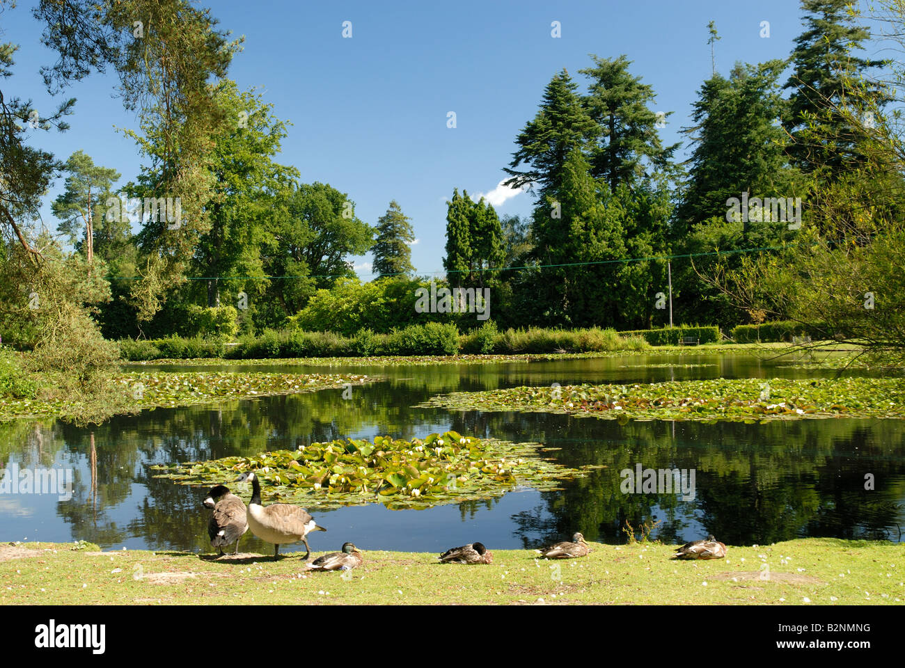 The lake at Bedgebury Pinetum, Kent - Stock Image