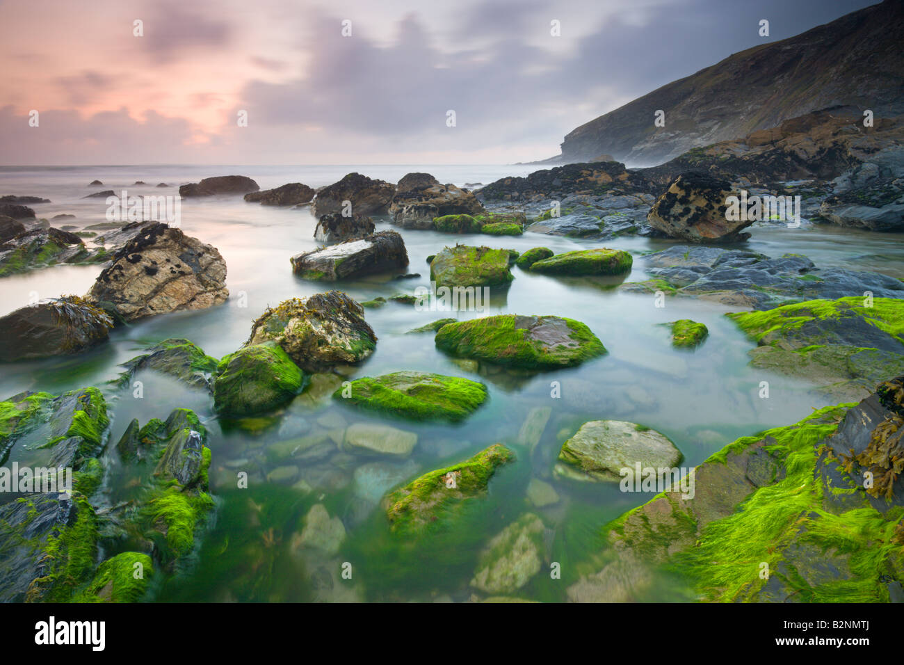 Vibrant green algae exposed at low tide at Tregardock Beach North Cornwall England - Stock Image