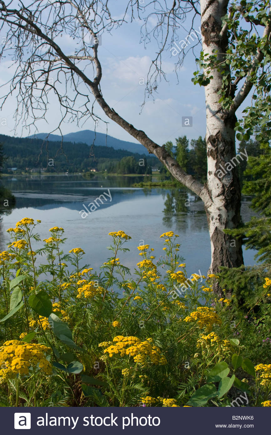Sagle slough on a calm summer day Sandpoint Idaho USA - Stock Image