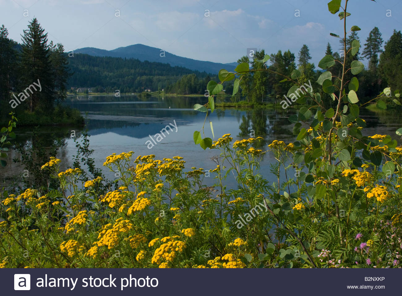 Sagle slough on a calm summer day Sandpoint, Idaho, USA - Stock Image