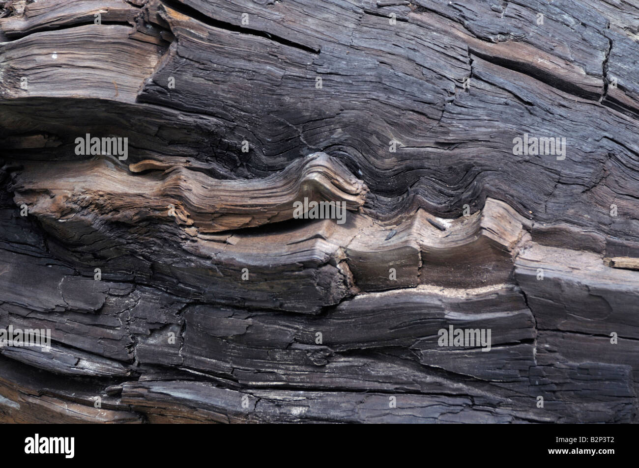 Lignite or brown coal (Metasequoia) from open cast mining in Brandenburg, Germany - Stock Image