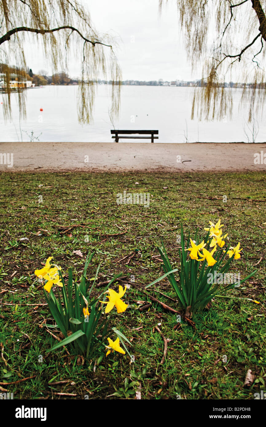Deserted park bench next to lake flowers in foreground - Stock Image