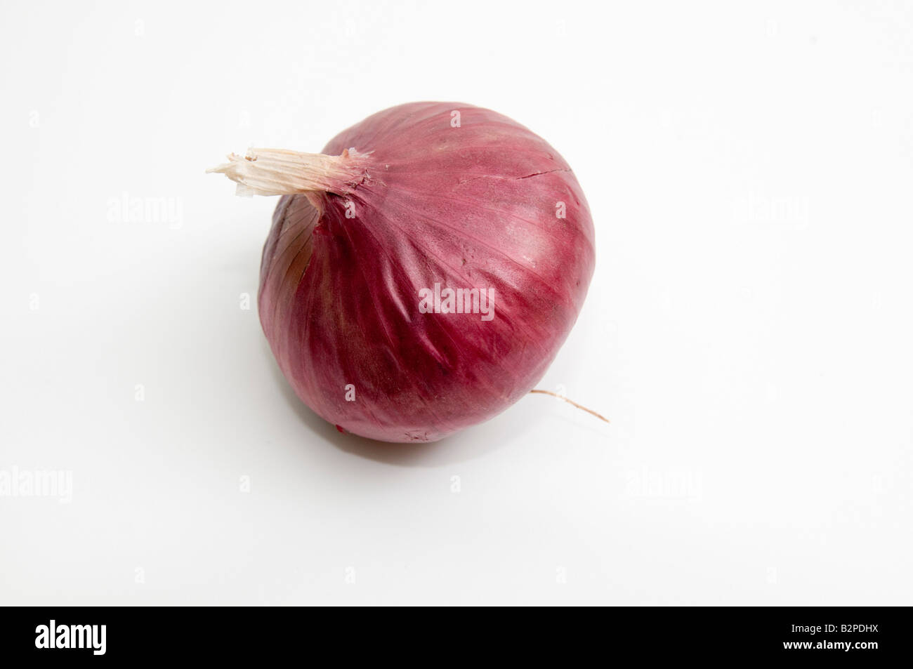 Red Onion on white background - Stock Image