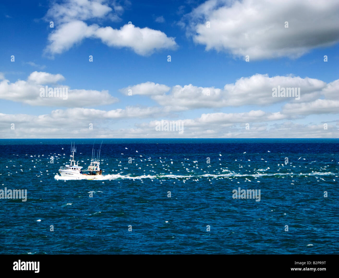 Small fishing boat trawler heading back to port with hundreds of gulls behind in his wake, Europe - Stock Image