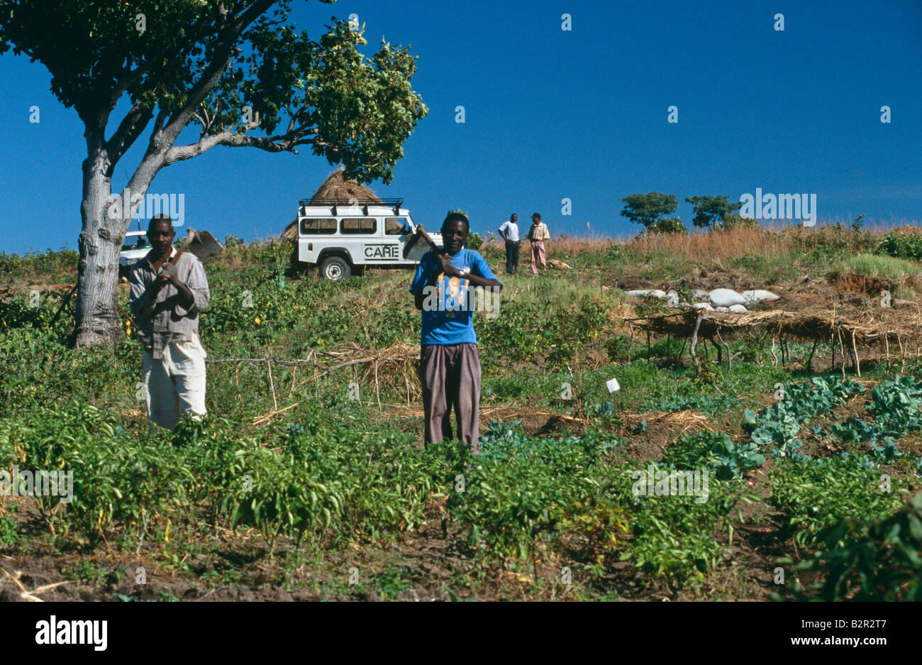 Agriculture in Angola. Stock Photo