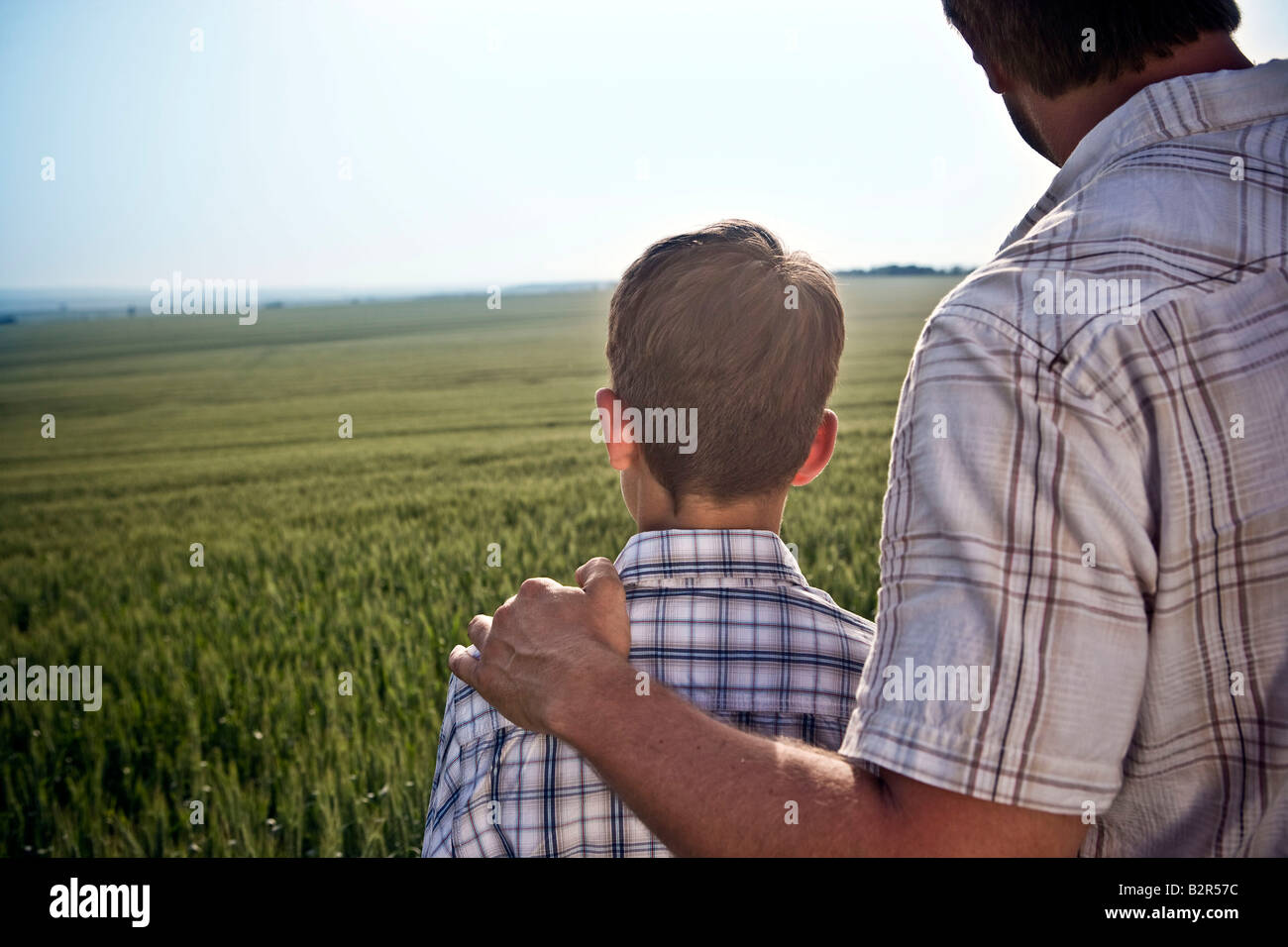 Father and son in wheat-field - Stock Image