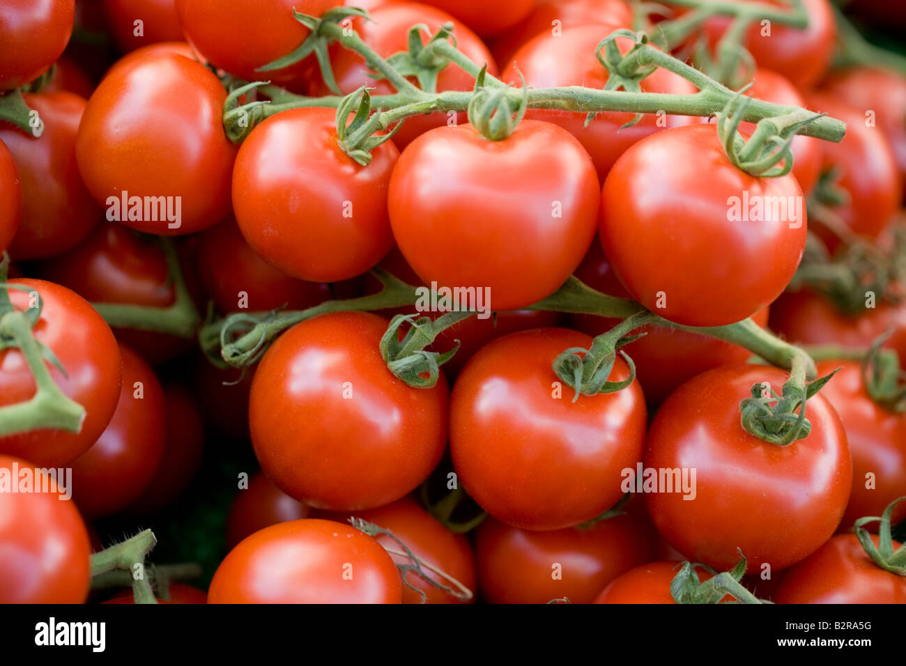 Tomato, Vegetable, Fruit, Vine, White, Backgrounds, Freshness, Food, Macro, Isolated, Dew, Organic, Wet, Red, Healthy - Stock Image