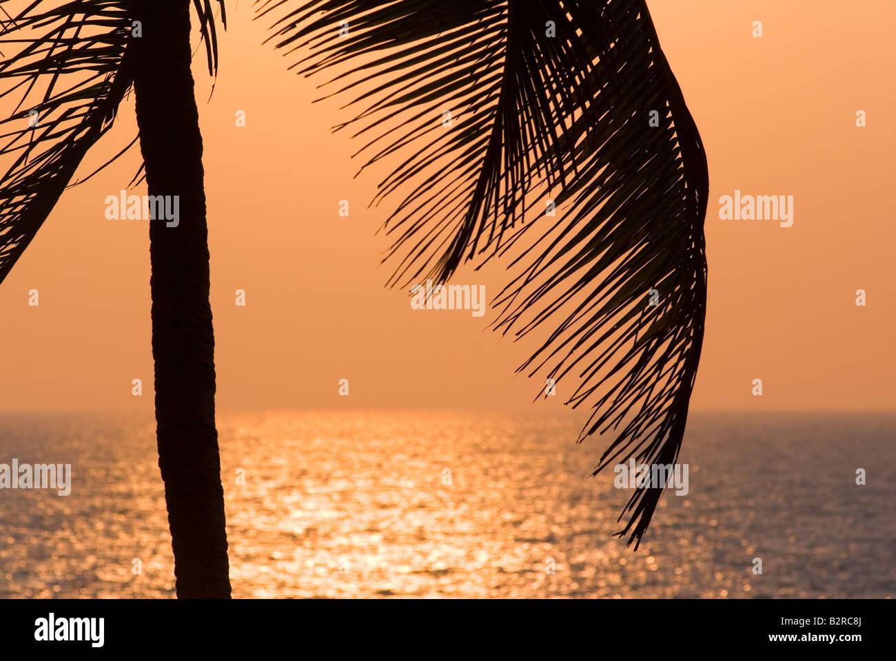 Palm Trees, Arambol, Goa, India, Subcontinent, Asia - Stock Image