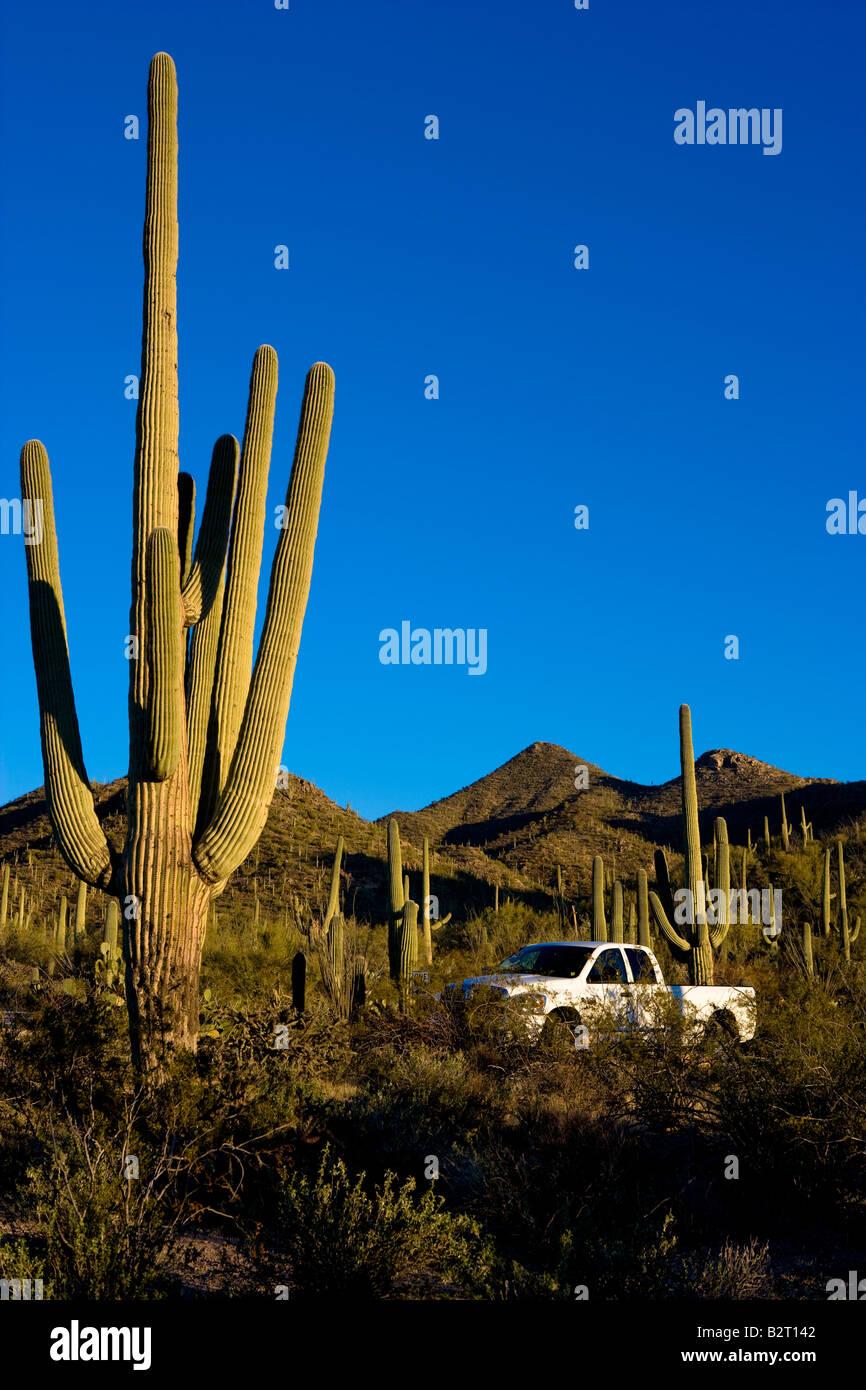 Dodge truck parked amongst saguaro cactus in National Park Arizona, USA - Stock Image