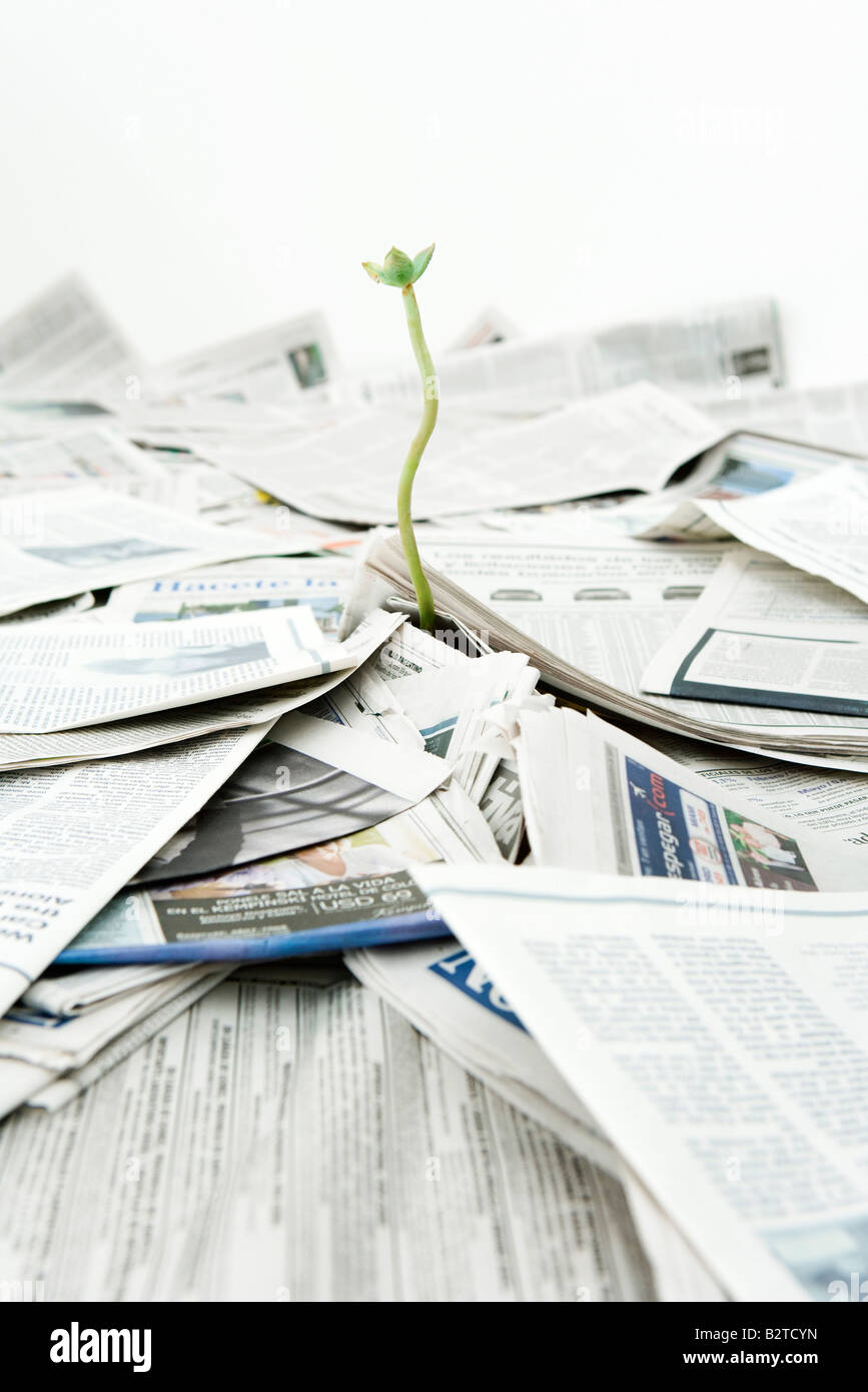Plant growing out of pile of newspapers - Stock Image