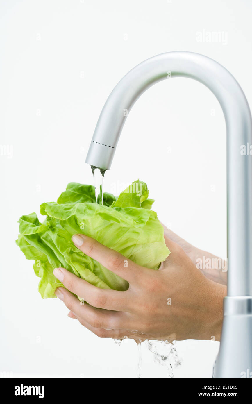 Woman rinsing lettuce under faucet, cropped view of hands - Stock Image