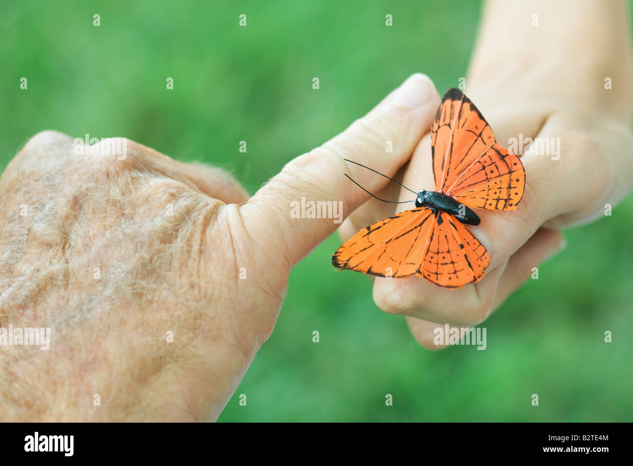 Hands of child and elderly person with butterfly, close-up - Stock Image