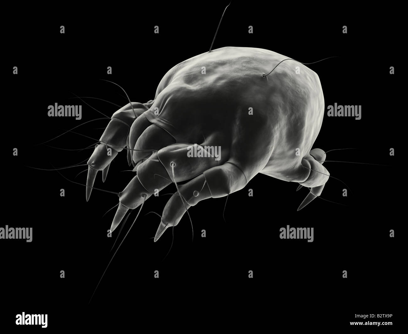 isolated mite - Stock Image