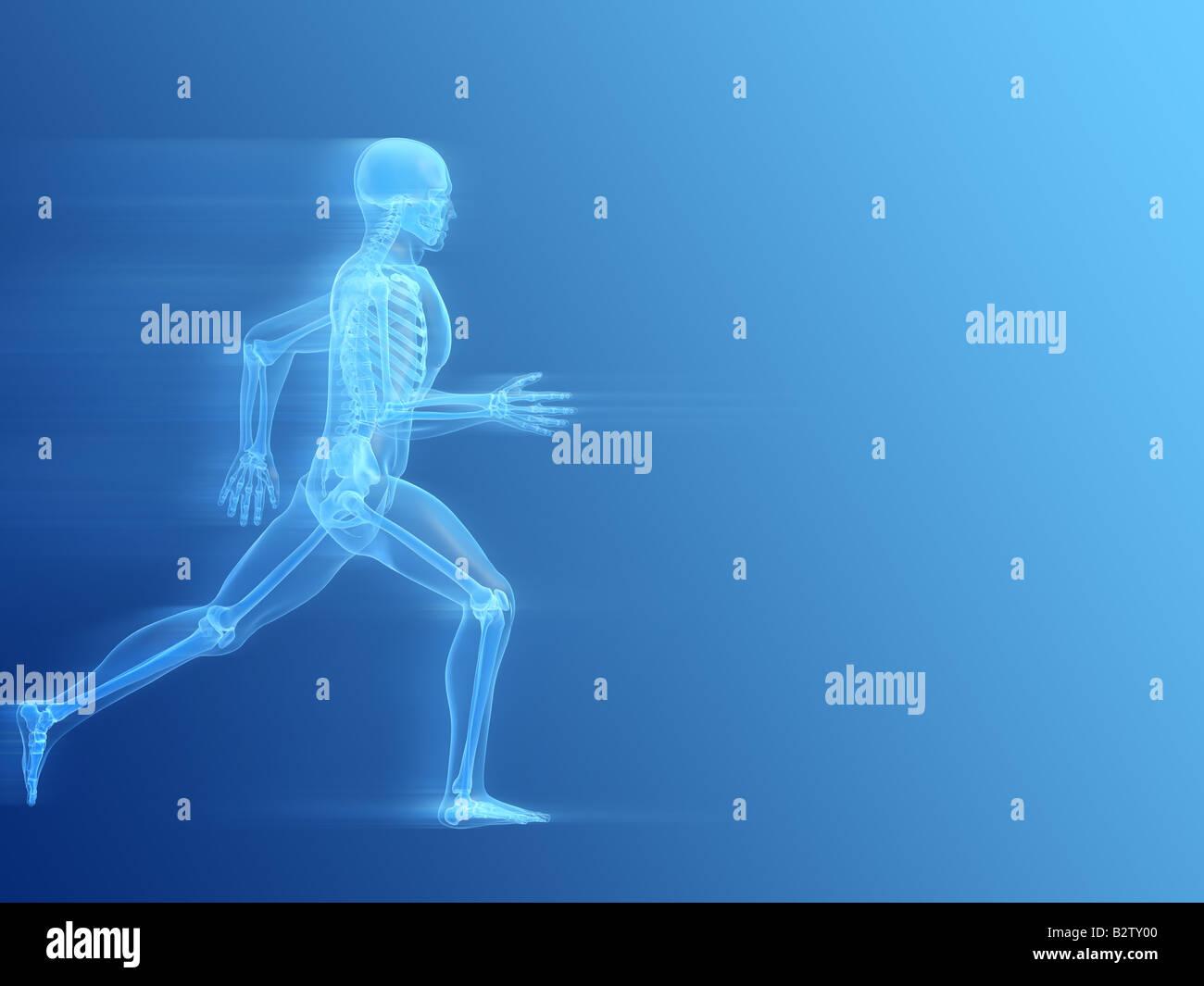 running man - anatomy - Stock Image