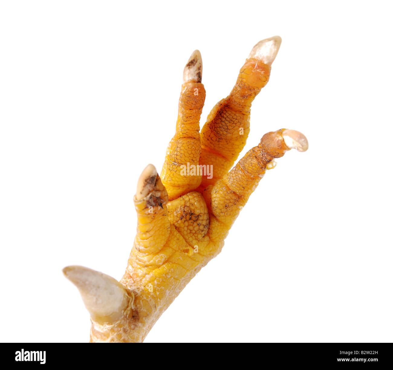 Chicken Foot Stock Photos & Chicken Foot Stock Images - Alamy